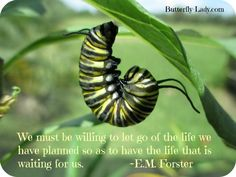 Change is the essence of life. Be willing to surrender what you are for what you can become! Butterfly Spirit Animal, Butterfly Quotes, Butterfly Images, Butterfly Kisses, Butterfly Art, Amazing Quotes, Great Quotes, Metamorphosis Quotes, Mother Nature Quotes