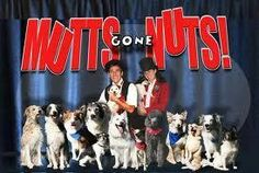 Image result for mutts gone nuts