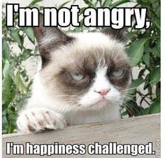 Meet Grumpy Cat memes that will make you LOL. Check Angry Cat Hate, Good and other popular memes. Check also for Grumpy Toad and Grumpy Turtle. Grumpy Cat Quotes, Funny Grumpy Cat Memes, Funny Memes, Funny Captions, Funny Morning Memes, Hilarious Jokes, Animal Memes, Funny Animals, Cute Animals