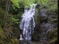 Bushwhack past Henline Falls in Opal Creek for more waterfalls. Article giving directions and pictures.