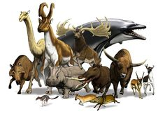 12 extinct artiodactyls- Indigo Taylor.                                                                                                                                                                                 More