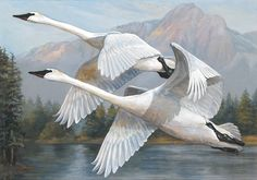 2015 Federal Duck Stamp Contest Entry 105