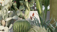 Is Fine Detail Nature a game changer in Lumion PRO Music Happy, Game Changer, Dream Garden, Cactus Plants, Garden Design, Colours, Tools, Landscape, Games