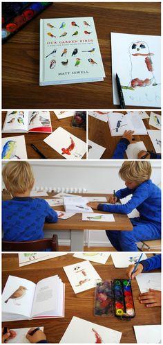 Matt Sewell_birds- summer school idea for my Shackelbirds