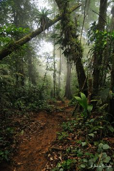 ✯ Cusuco National Park, Honduras, Central America