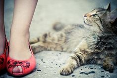 Can't beat a picture with both red shoes AND a kitty!
