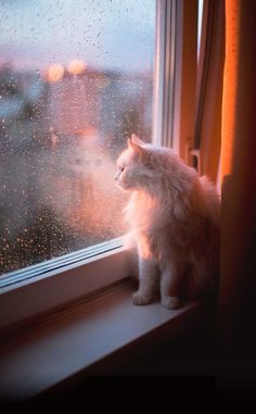 cats in the rain pictures Kittens Cutest, Cats And Kittens, Cute Cats, Funny Cats, Animals And Pets, Baby Animals, Cute Animals, Cat Window, Photo Chat