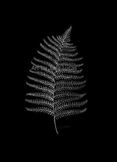 New Zealand Fern Leaf - Tiny Dots White Gel Pen Black Paper Rainforest Art Plant…