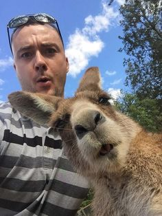 My Cousin Wanted A Selfie With A Kangaroo http://www.boredpanda.com/funny-animal-selfies/