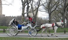 Horse drawn carriage in NYC - Central Park - NYC - New York     Tips on Horses and Ponies selection, riding, grooming Learn more http://rideaprettypony.blogspot.com
