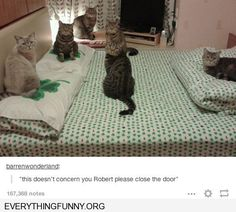funny cat pictures cat meeting this doesn't concern you Robert please close the door humor sites like canihazacheeseburber, lolcats,