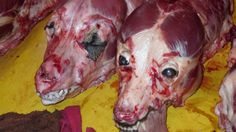 Petition · Daegu, Korea! Close Down Chilseong Market's Illegal Dog Slaughterhouses-Enforce Animal Protection Law! · Change.org