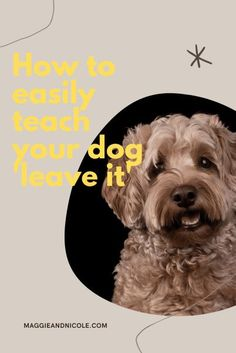 how to teach your dog leave it Therapy Dog Training, Dog Training Books, Leash Training, Therapy Dogs, Dog Training Tips, Dog Status, Positive Dog Training, Good Citizen, Foster Dog