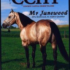 MR Junewood, 1996 Buckskin Stallion, KeSa Quarter Horses
