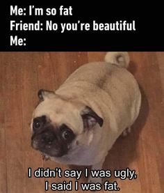 Scroll through these hilarious funny dog memes when you need a pick-me-up. Today we've rounded up the best funny dog memes. Humor Animal, Funny Animal Jokes, Crazy Funny Memes, 9gag Funny, Really Funny Memes, Stupid Funny Memes, Funny Relatable Memes, Haha Funny, Funny Animal Pictures