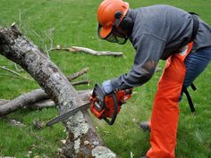 Treezy Tree Services Your Local Certified Arborists Offering Tree Removal, Tree Lopping, Tree Cutting, Tree Trimming, Tree Cutting in Brisbane Southside Tree Lopping, Tree Removal Service, Tree Felling, Tree Care, Removal Services, Tree Tops, Outdoor Power Equipment, How To Remove, Service Tree