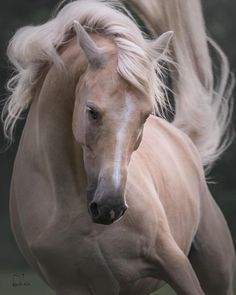 Photographer Captures the Awesome Power of Draft Horses in Her Dramatic Equine Action Shots Amazing Photography, Nature Photography, Some Beautiful Images, Horse Photos, Wildlife, Horses, Animals, Instagram, Happy