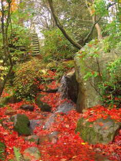 The japanese garden at Washington Park Arboretum in Seattle / USA (by Krista Roesinger).