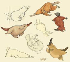 Platypus sketches by Polarkeet.deviantart.com on @deviantART