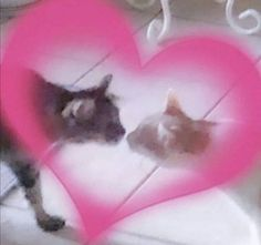 Cat Aesthetic, Cute Memes, Wholesome Memes, Pretty Cats, Cute Icons, Mood Pics, Reaction Pictures, Cat Love, Cute Pictures