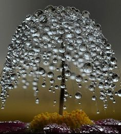 I am a fan of Macro photography, which is why this image caught my eye. The droplets could be interpreted as leaves, making it appear as a willow tree.