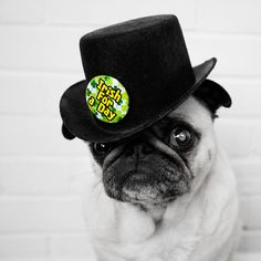 pugs with hats