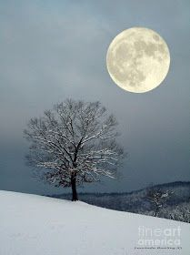 Winter's Moon   A1 Pictures  [per previous pinner]