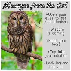 Messages from the Owl – Witches Of The Craft® - Eule Lama Animal, Animal Meanings, Color Meanings, Owl Quotes, Spiritual Animal, Animal Spirit Guides, Animal Medicine, Animal Symbolism, Power Animal