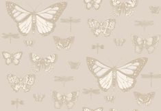 Butterflies and Dragonflies by Cole & Son - Grey - Wallpaper : Wallpaper Direct Cole And Son Wallpaper, Grey Wallpaper, Print Wallpaper, Wallpaper Roll, Luxury Wallpaper, Nursery Wallpaper, Custom Wallpaper, Dragonfly Wallpaper, Cole Son