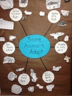 Inquiring Minds: Mrs. Myers' Kindergarten Animals in Winter- The Investigation Phase.