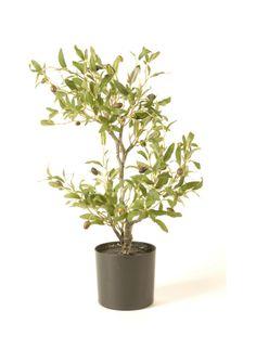 Oliivipuu 55 cm 49,90€ http://www.netanttila.com/shop/fi/netanttila/sisustaminen-ja-koristeet/-oliivipuu-55-cm-6762843