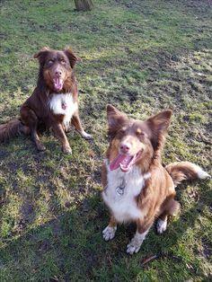 Hunde Foto: Simone und Alice und DJ - Geschwisterliebe Hier Dein Bild hochladen: http://ichliebehunde.com/hund-des-tages  #hund #hunde #hundebild #hundebilder #dog #dogs #dogfun  #dogpic #dogpictures