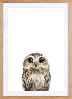 Little Owl als Gerahmtes Poster von Amy Hamilton   JUNIQE