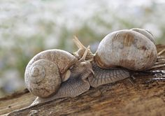 The SnailIdeas  : More Pins Like This At FOSTERGINGER @ Pinterest