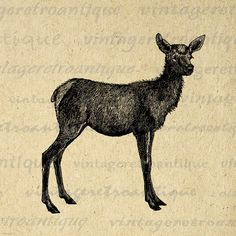Digital Graphic Baby Elk Deer Download by VintageRetroAntique
