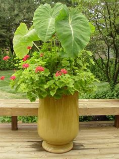 Great large container garden.  Love the elephant ear caladium, but would likely do something other than the annual geraniums that are the lower planting.