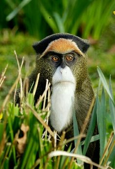 Top 27 Funny Monkey Pictures is part of Animals - Do you love monkeys, and you are sick of watching old pictures of monkeys on social media Well try these top 27 funny pictures of monkeys Monkeys are primates There are around 260 different spec… Amazing Animals, Interesting Animals, Unusual Animals, Rare Animals, Animals Beautiful, Animals And Pets, Funny Animals, Monkeys Animals, Cute Wild Animals