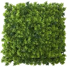uland artificial mixed vine and fern panel - Google Shopping Tiny House Living, Home Living Room, Google Shopping, Ferns, Vines, Living Room, Living Rooms, Fern, Grape Vines
