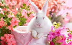Spring brings the Easter and the Easter Bunny