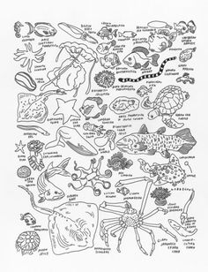 Zoology, obviously. | Sea Creatures at The American Museum of Natural History, by  Jason Polan - 20x200.com