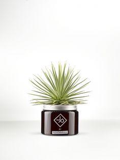 Vitamin Plant For Men Agave Thejoyofplant.co.uk