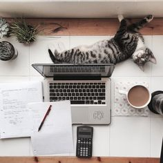 7 Tricks to Stay Focused While Studying