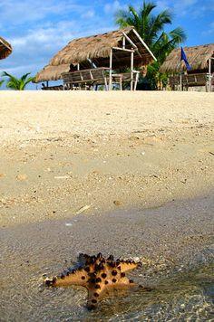 Swim with Spongebob's friends on Starfish Island. | 14 Incredible Things To Do In Puerto Princesa, Palawan