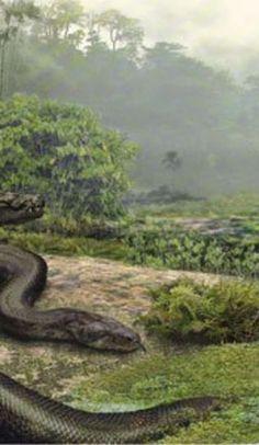 Titanoboa, the world's largest snake, goes on display (UPDATE)
