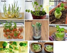 8 Vegetables You Buy Once And Regrow Forever ! How To Grow Them Full Tips - https://topnaturalremedies.net/news-nutrition-health/8-vegetables-buy-regrow-forever-grow-full-tips/