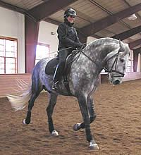 Clear Cues for the Canter Depart- how to 'un-train' accidental negative reinforcement