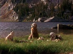 Homeward Bound: The Incredible Journey (1993)  One of my favorite childhood movies! ❤️