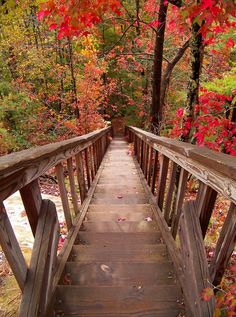 The way to Silvermine Arch, Daniel Boone National Forest /...