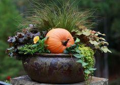Fall container...Brenda Addington's Zone 7B garden in Suwanee, Georgia via FG -