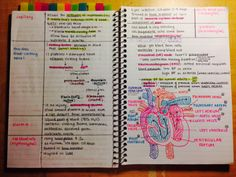 this girl's note-taking and organizing is seriously exciting the crap out of me. the pens, the stickies, ahhhhh